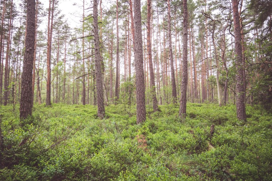 picture of a forest